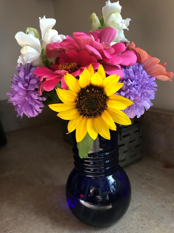 Cut flowers sunflower zinnia
