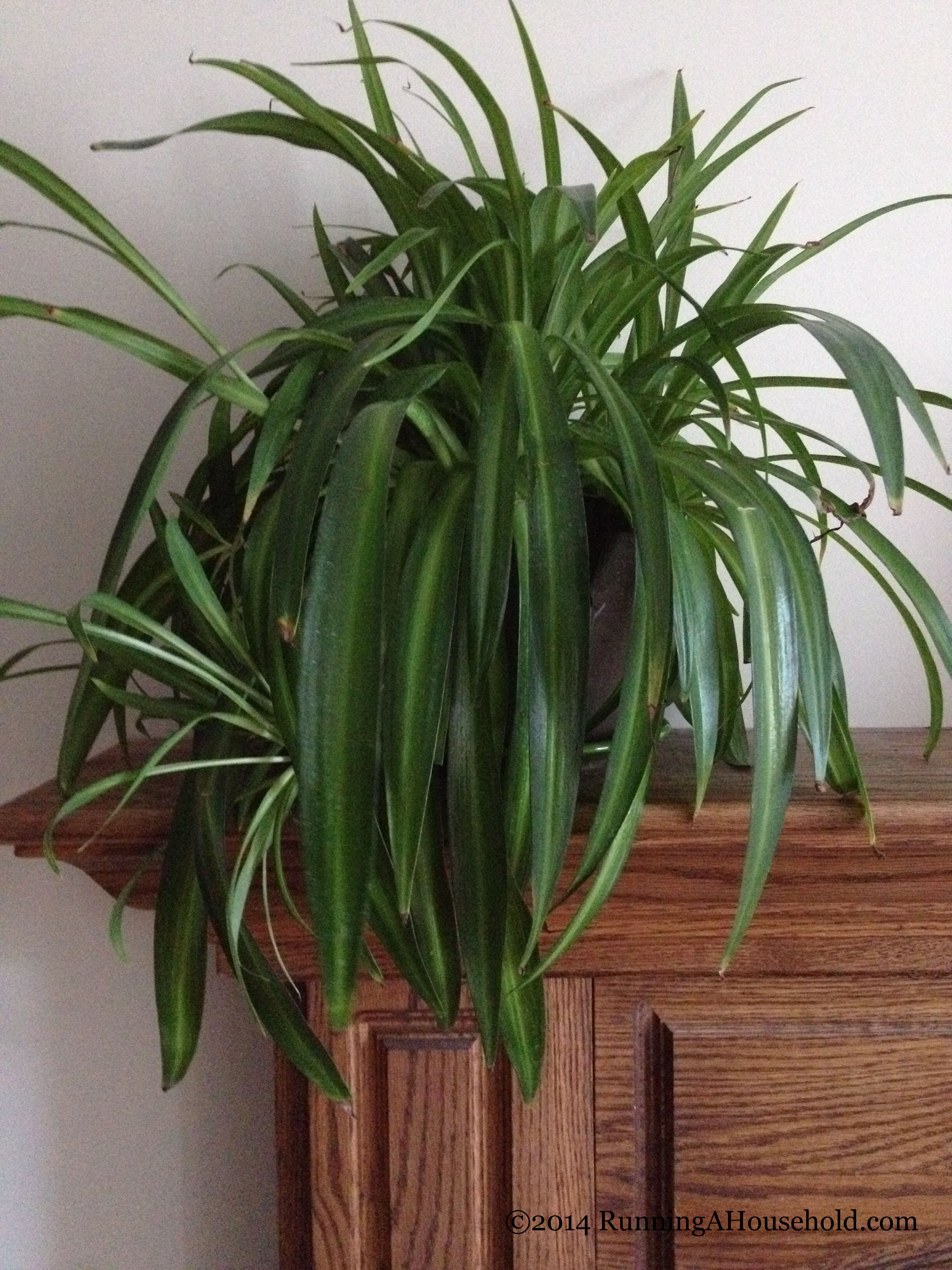 Sprucing Up Your Home with Houseplants - Running A Household
