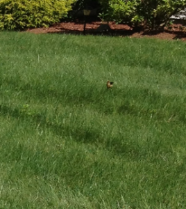 Green Grass; Don't like weeds