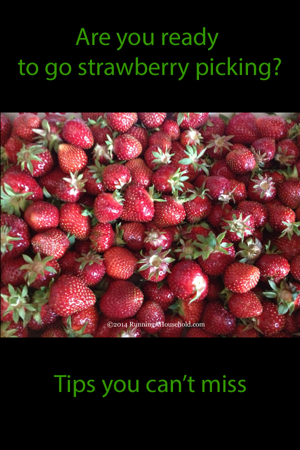 Are you ready to go strawberry picking: tips you can't miss