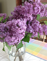 Dark Purple Lilacs