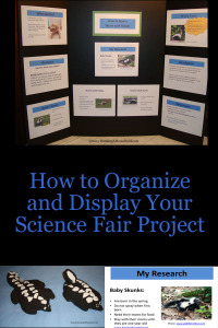 How to Organize and Display Your Science Fair Project