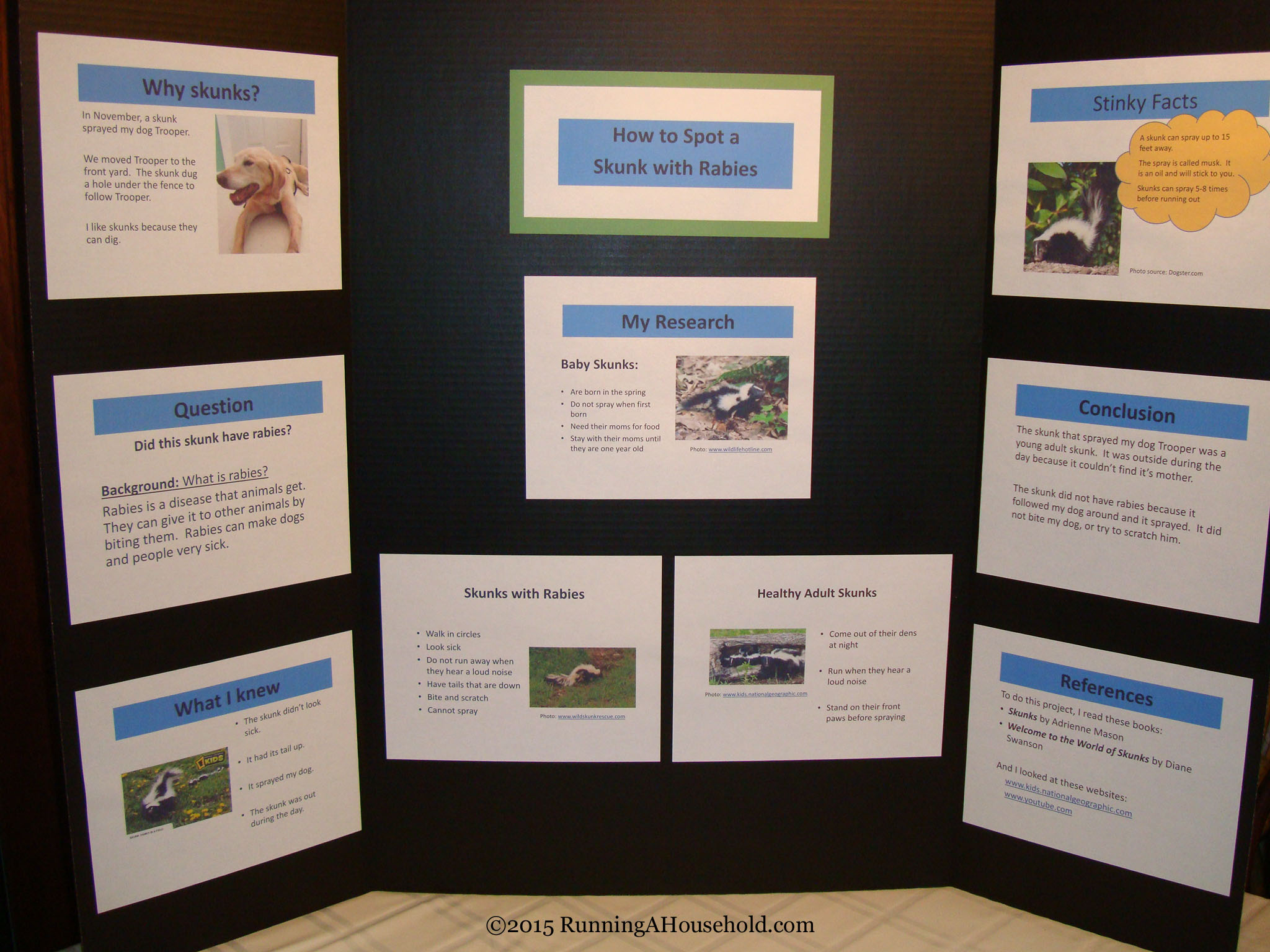 dog science fair projects