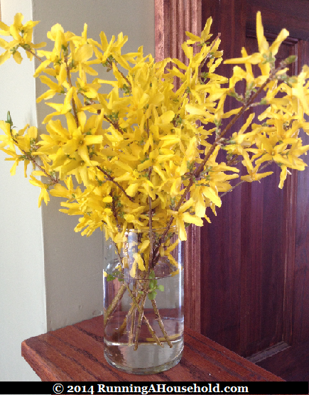 Fresh Flower Ideas for Spring Running A Household : Forsythia in glass vase from runningahousehold.com size 435 x 556 png 615kB